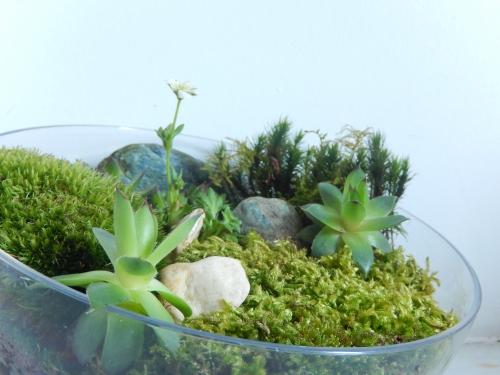 DIY un joli jardin d'intérieur