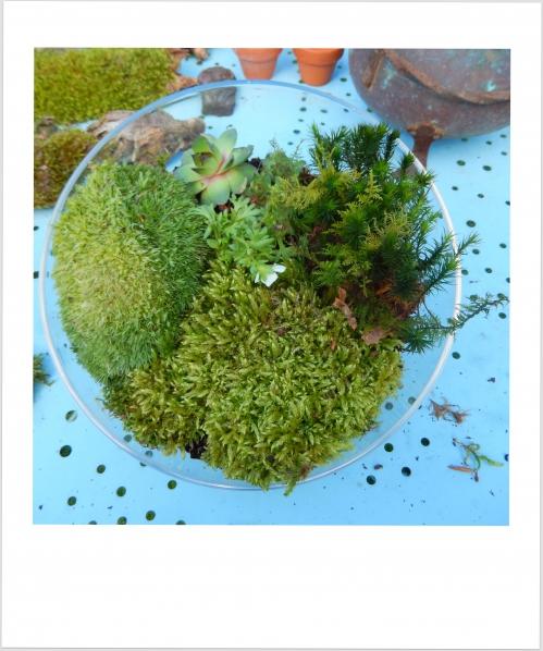 Jardin d'intérieur:On met la mousse et les plantes en place
