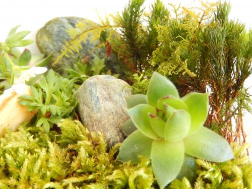 mon jardin d'intérieur: gros plan