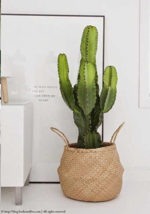Inspiration cactus