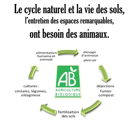 le cycle sol animaux.jpg