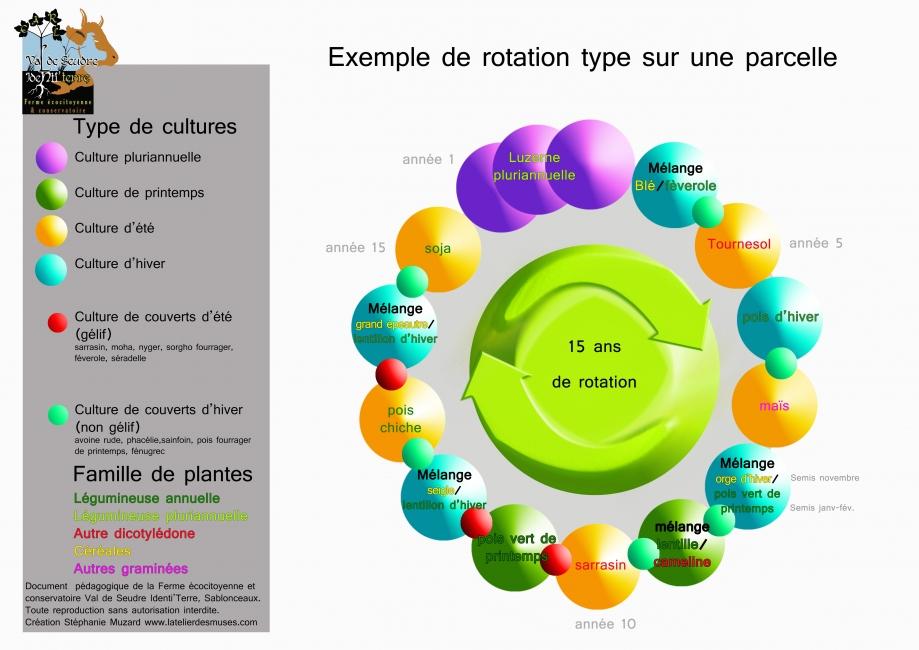 rotation-des-cultures-schéma.jpg