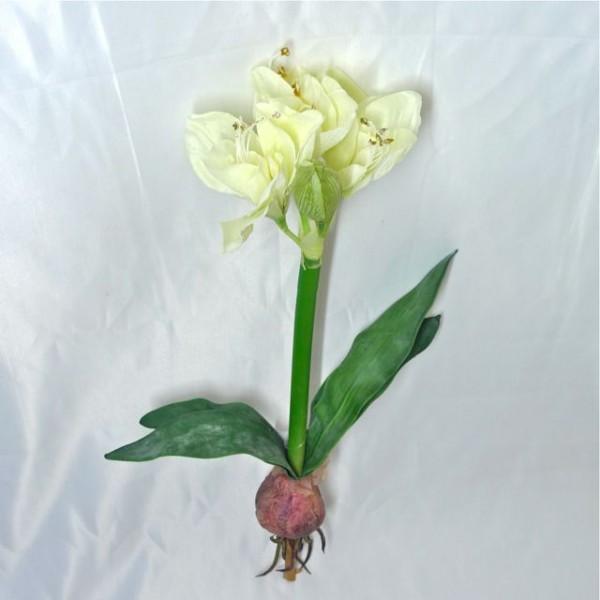 Comment poussent les plantes bulbes istyablog pour savoir en toute d contraction - Plante a bulbe liste ...