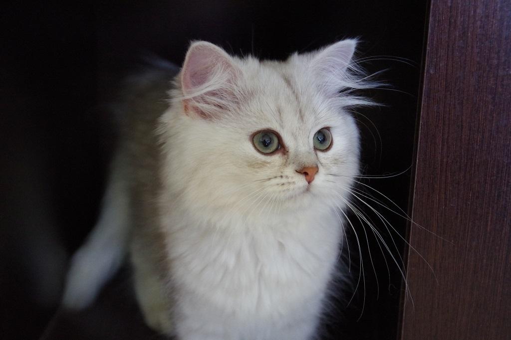 Miss l ly l 39 arriv e la maison for Arrivee chaton a la maison