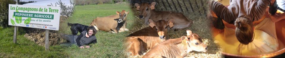 L'usine � 4 vaches