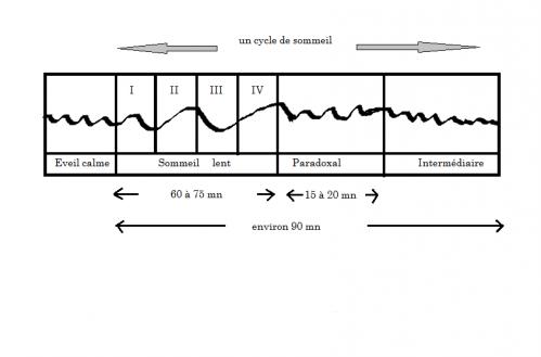 schéma cycle de sommeil