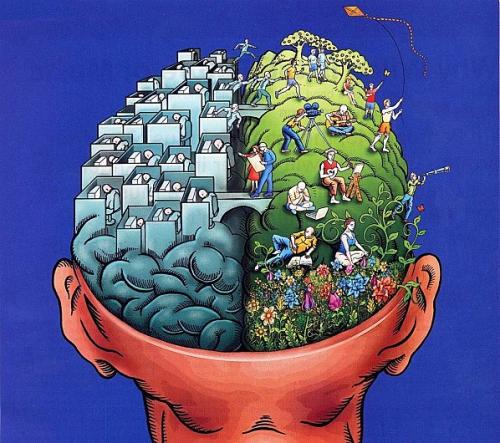cerveau-droit-et-gauche