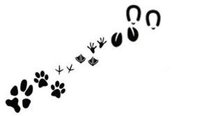 88vo2-6827153_ensemble_d_39_empreintes_d_39_animaux_pour_la_conception_de_l_39_ecologie.jpg