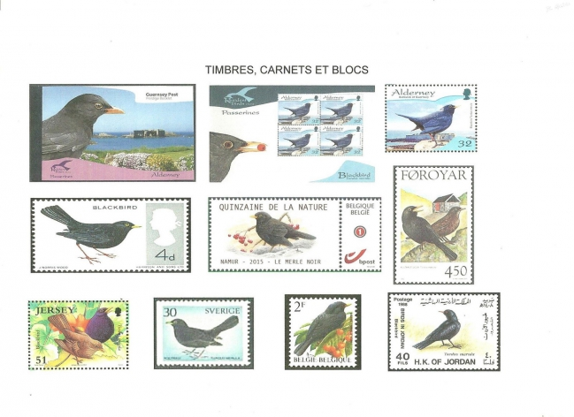 Timbres carnets et blocs merle (version 1).jpeg