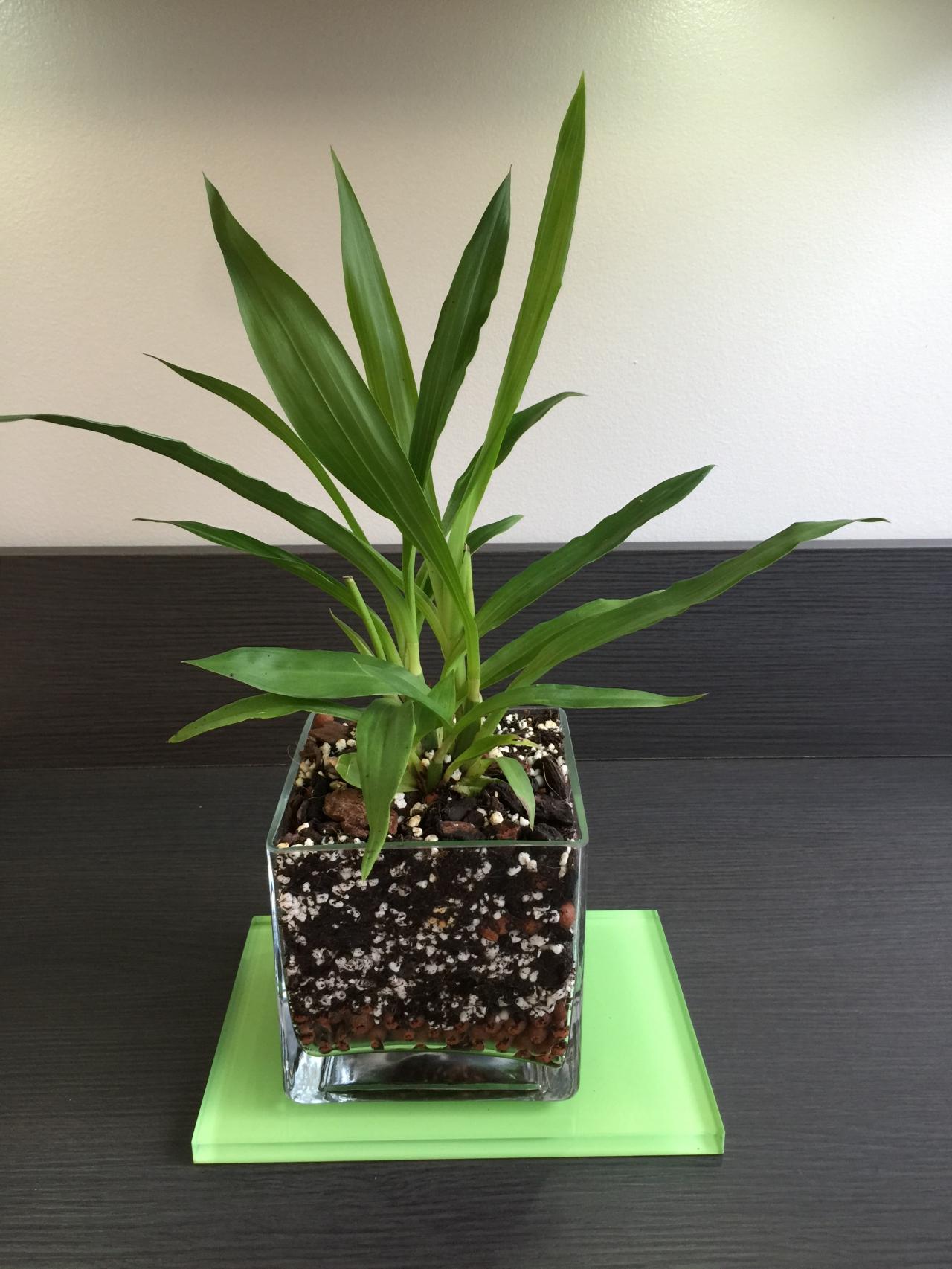 sujets divers la clinique des orchidees 36. Black Bedroom Furniture Sets. Home Design Ideas