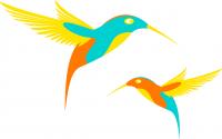 La nouvelle du colibri