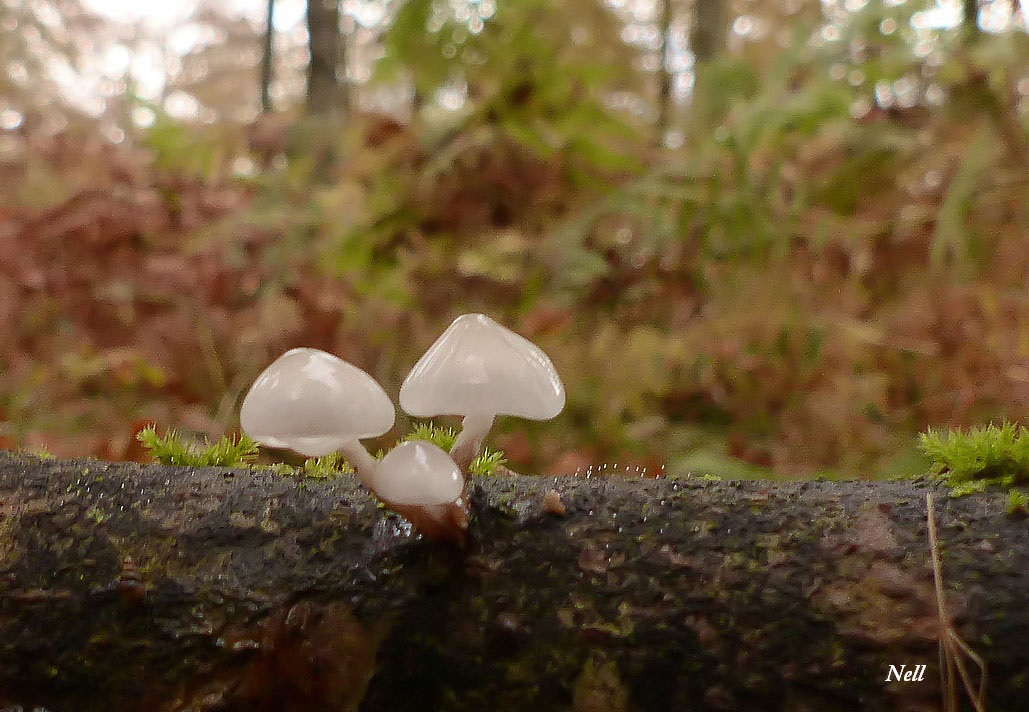 Champignons les photos de nell - Champignon qui pousse sur les arbres ...