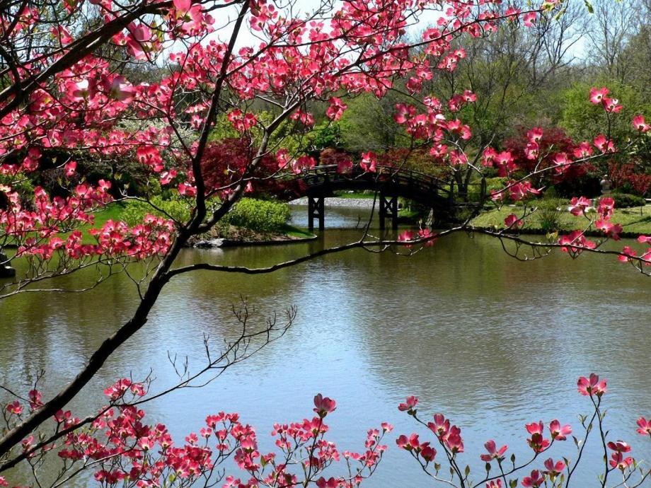 image-de-printemps.jpg
