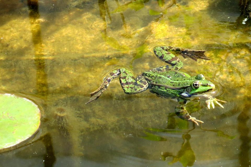 frog-1517692_960_720.jpg