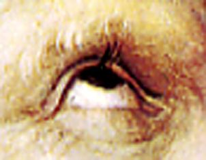 l'oeil de C