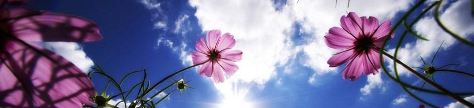 COULEUR NATURE  -  Créez vos produits naturels -