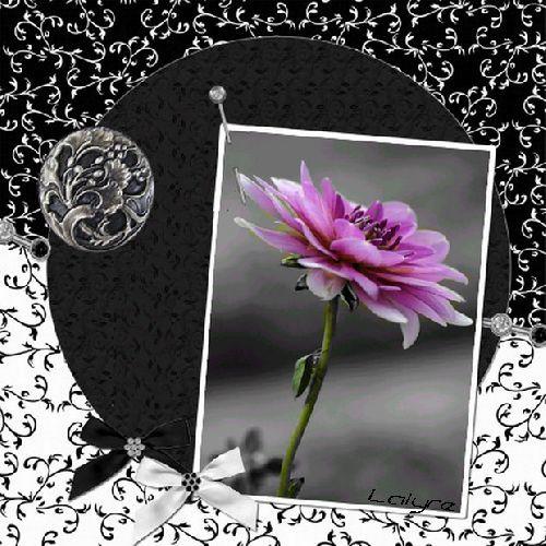 La fleur mauve