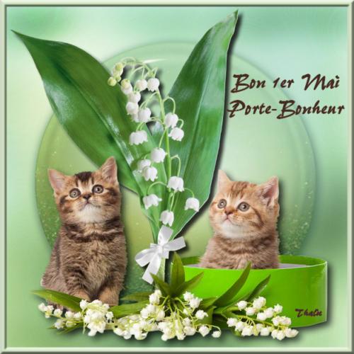 chats muguet mai 2014.png