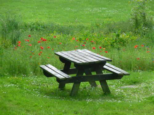 Table de pique-nique dans champs de coquelicots Bois d'Amour à Josselin (56)