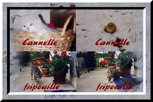 Souvenirs de Fripouille et Cannelle