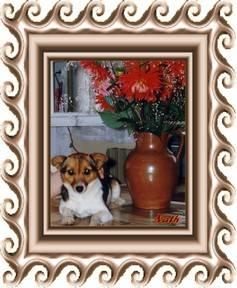 Gigi  adorable petite chienne