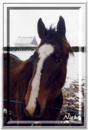Pépère notre cheval