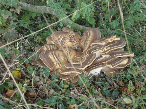 Un drôle de champignon, photo prise sur le bord du halage