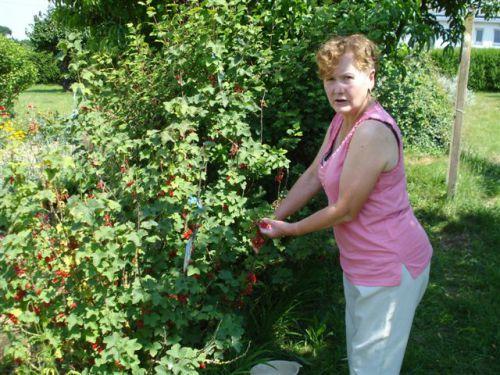 Maminou cueille les groseilles de son magnifique jardin