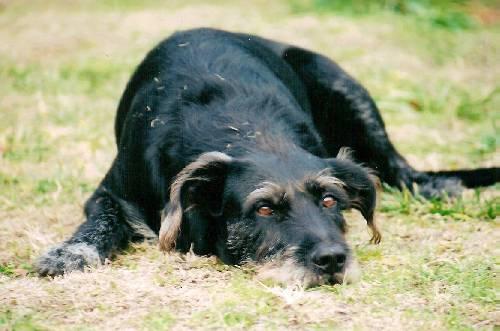 GUS (7 ou 8 ans - 2004)