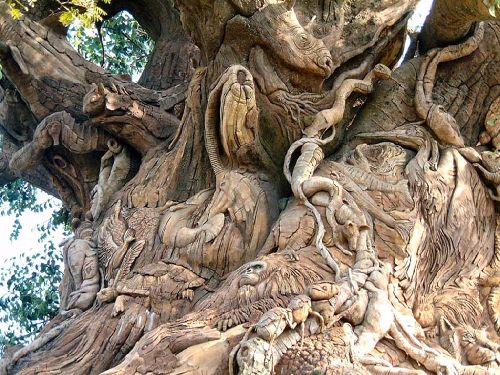 L'arbre Royal
