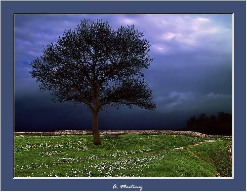 L'arbre des remparts