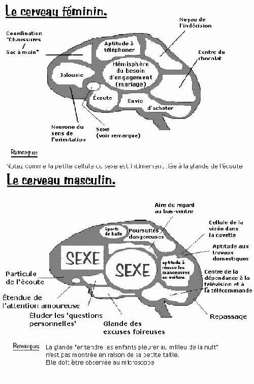 Cerveaux Homme/Femme