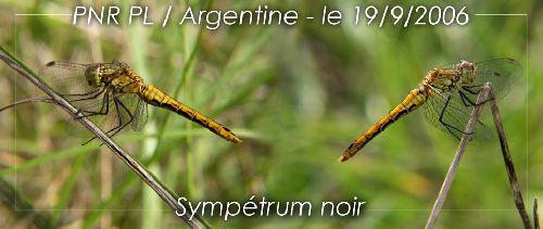 Sympétrum-noir