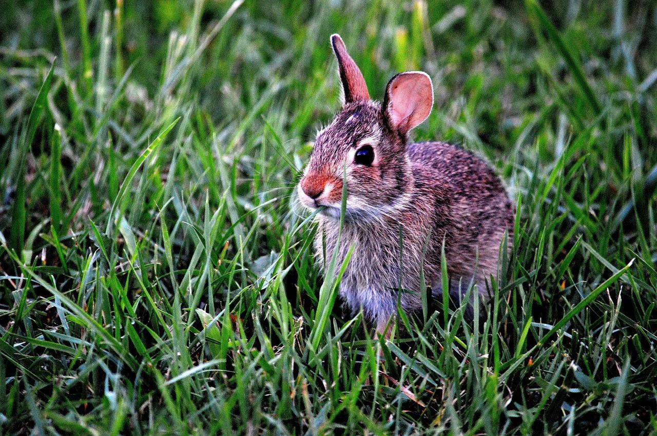bunny-183301_1280.jpg