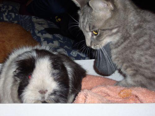 Xena et Leeloo