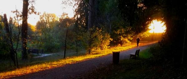 Ombre et lumière parc du chateau by Sara Do.jpg