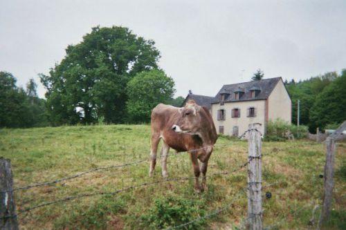 Une jolie vache... en chemin vers le Mont.