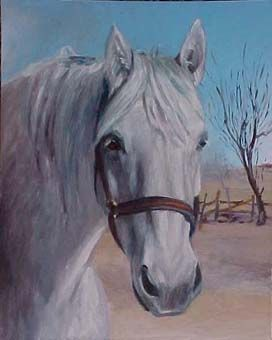 Un cheval blanc