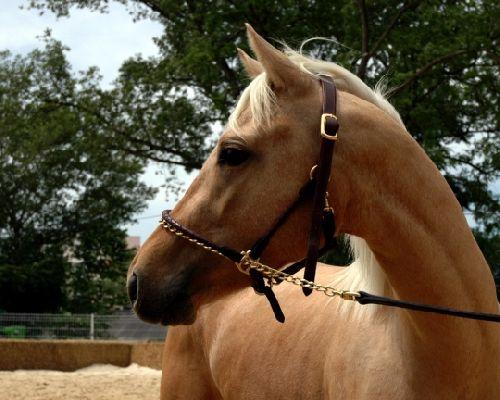 Un jeune cheval