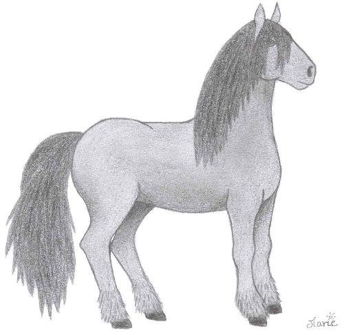 Un poney souris