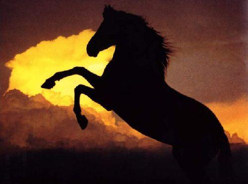 Un cheval dans la nuit...