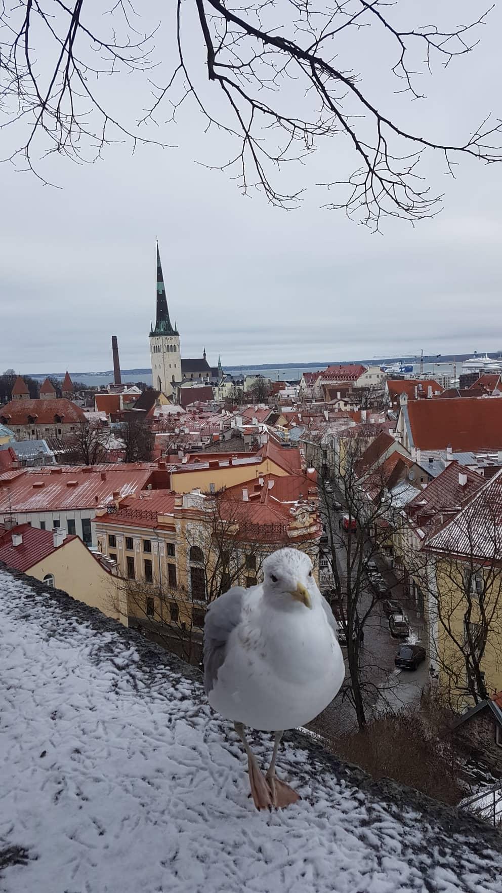 Point de vue de la vielle ville.