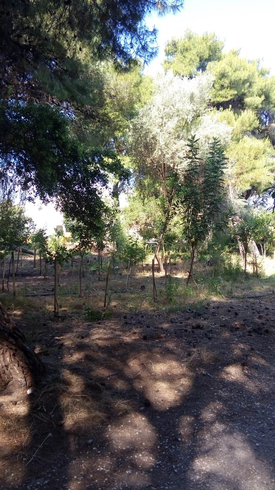 Travail dans la forêt de Xylokastro