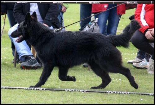 iwolf allure1.jpg
