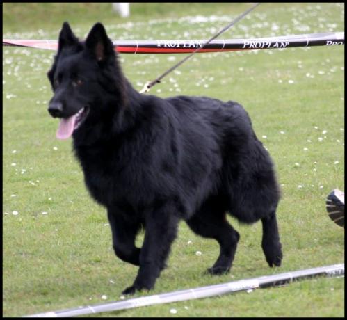 iwolf6.jpg