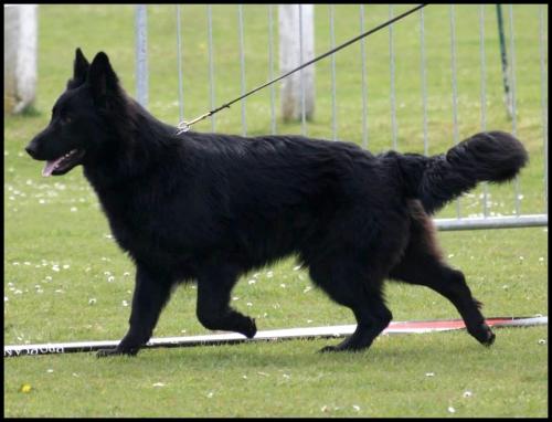 iwolf9.jpg