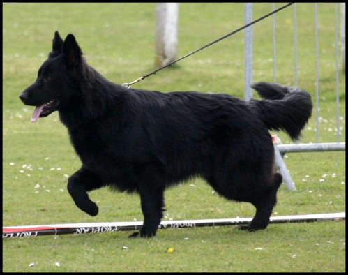 iwolf10.jpg