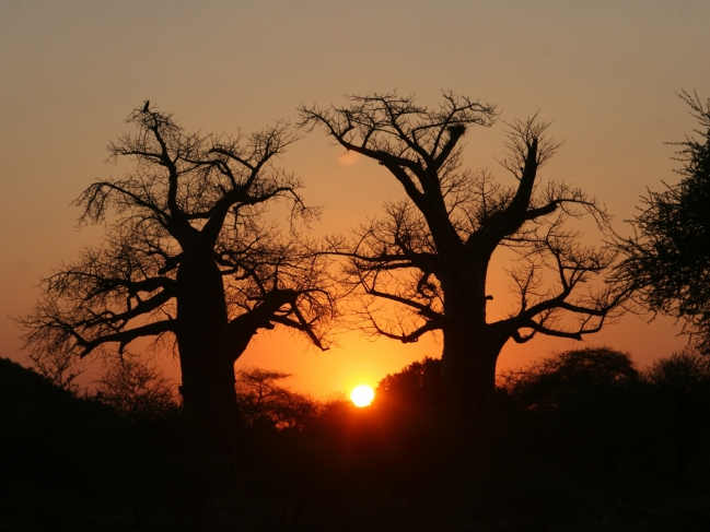 Afrique_du_Sud_Baobabs_at_Sunset[1].jpg
