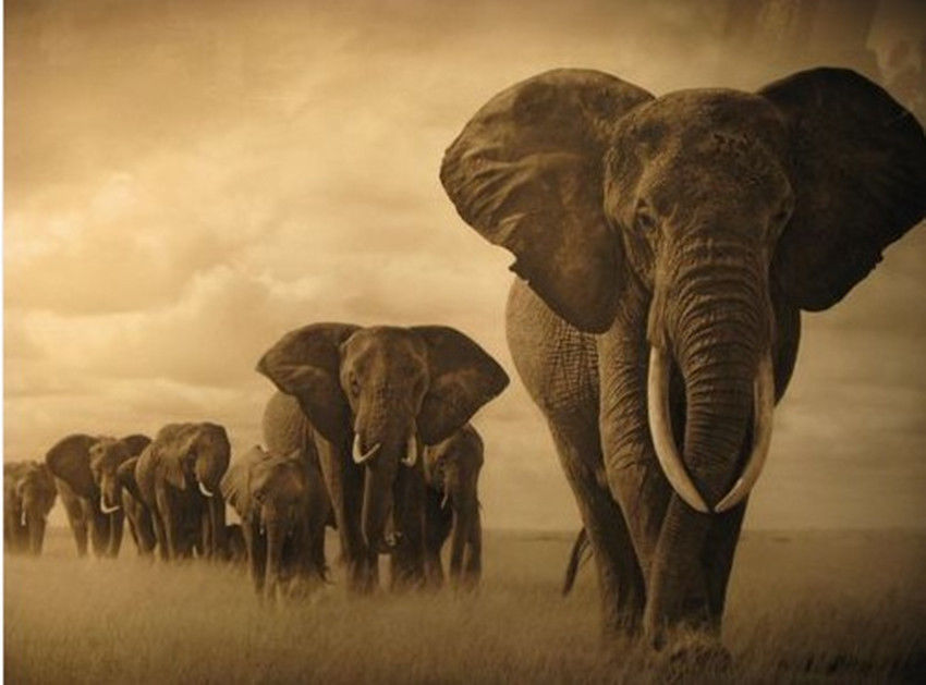 -font-b-African-b-font-font-b-animals-b-font-elephant-painting-on-canvas-landscape[1].jpg