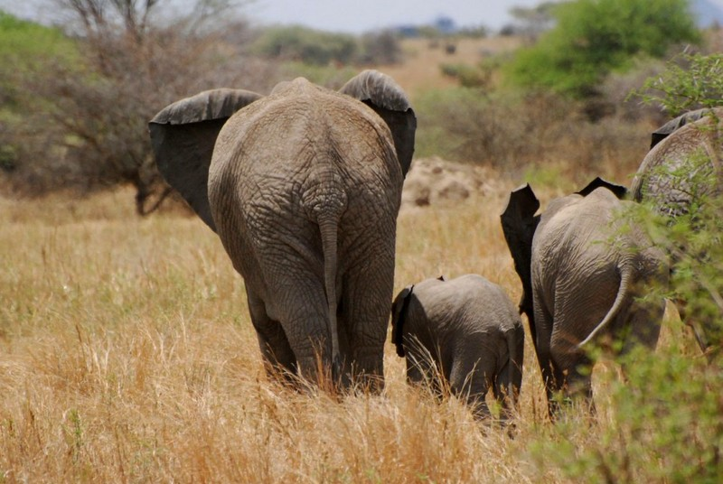 Kenya-animaux-elephants-savane-groupe-ag[1].jpg